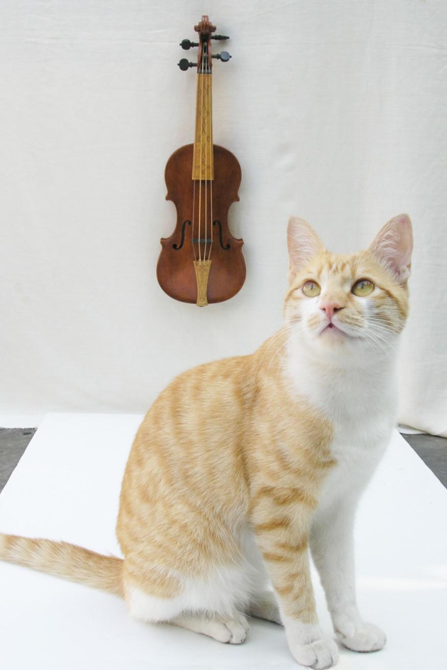 Gato y violin